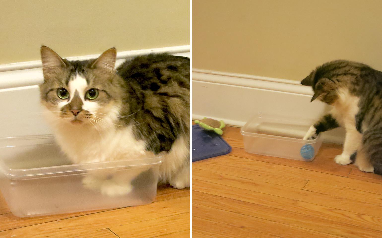 Des chats qui ronronnent : la marque Ziploc® passe le test