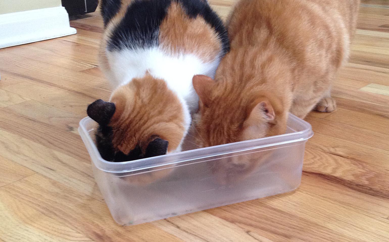 Les chats s'amusent: la marque Ziploc® passe le test