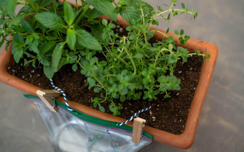 Self-Watering-Planter-Body-6-2x
